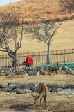 Jonge lokale kerel het voeden deers in het park Mensen en dieren in de stad stock foto's