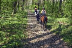 Jonge meisjes die op horseback door het bos berijden Stock Foto