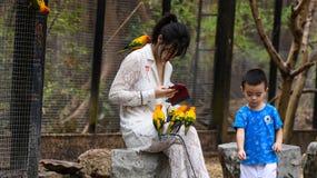 Jonge meisjes met kleine gele papegaaivogels royalty-vrije stock fotografie