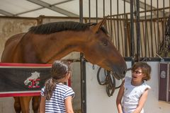 Jonge meisjes met paard het lachen Royalty-vrije Stock Foto