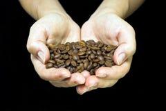 Jonge meisjeshanden die koffiebonen houden Stock Foto's