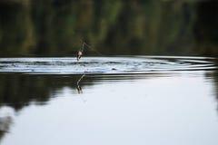 Jonge mens die bij rivier vissen Royalty-vrije Stock Foto's