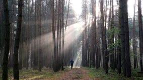 Jonge mens die bij zonsopgang bij mistig bos lopen stock videobeelden