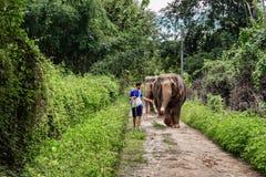 Jonge mens die een olifant op een wildernisweg binnen leiden van Chiang Mai royalty-vrije stock foto's