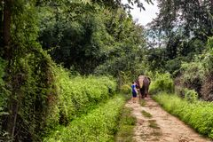 Jonge mens die een olifant op een wildernisweg binnen leiden van Chiang Mai royalty-vrije stock afbeelding