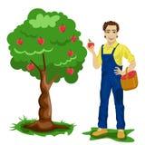 Jonge mens het plukken appelen in een boomgaard stock illustratie