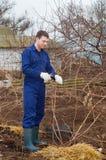Jonge mens het snoeien tak in een tuin Stock Afbeeldingen