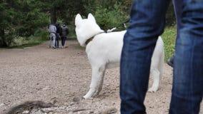 Jonge mens het spelen met hond openlucht stock video
