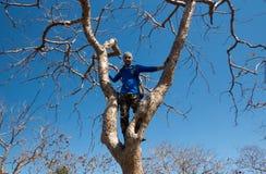 Jonge mens op boom-India Royalty-vrije Stock Afbeelding