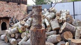 Jonge Mensen hakkend hout, thuis stock footage