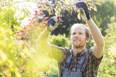 Jonge mensen scherpe tak in tuin stock foto's
