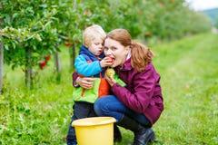 Jonge moeder en weinig peuterjongen het plukken appelen royalty-vrije stock afbeelding