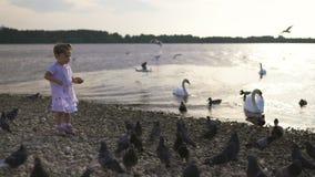 Jonge moeder met haar dochters die van het babymeisje zwaan en het kleine brood van eendjesvogels voeden bij een rivier die gesti stock footage