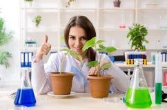 Jonge mooie biotechnologiechemicus die in het laboratorium werken stock foto