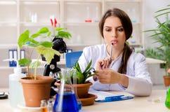 Jonge mooie biotechnologiechemicus die in het laboratorium werken royalty-vrije stock fotografie