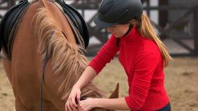 Jonge mooie vrouw die paard voor het berijden voorbereiden stock videobeelden