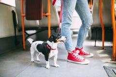 Jonge mooie vrouw met haar levensstijl van de hondstad royalty-vrije stock fotografie