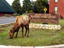 Jonge Muilezel Deers Stock Fotografie