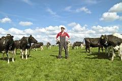 Jonge Nederlandse landbouwer met zijn koeien Stock Foto's
