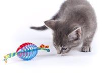 Jonge negen weken oud pluizig grijs gestreept katjes met een stuk speelgoed Stock Afbeelding