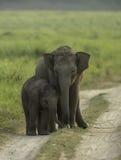 Jonge olifanten Stock Foto