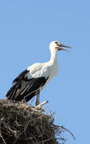 Jonge Ooievaar in het Nest Royalty-vrije Stock Afbeeldingen
