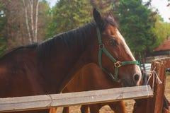 jonge paarden op het weiland Stock Foto