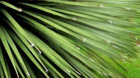 Jonge Palmbladen royalty-vrije stock afbeelding