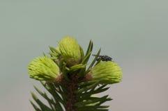 Jonge pijnboom met flie royalty-vrije stock foto