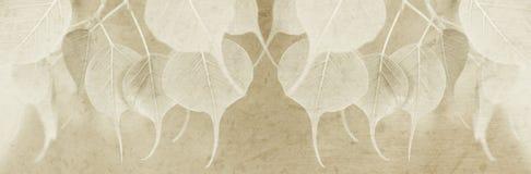 Jonge pipal bladeren met moerbeiboomdocument textuur voor titelbar Stock Afbeeldingen