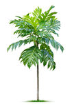 Jonge plant Royalty-vrije Stock Foto