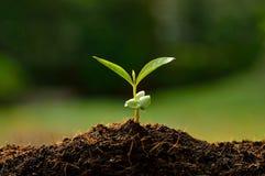 Jonge plant stock fotografie