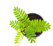 Jonge plant Royalty-vrije Stock Fotografie