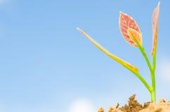Jonge plant Royalty-vrije Stock Afbeeldingen
