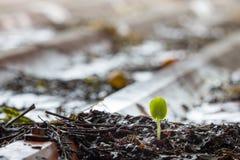 Jonge plant die groeien royalty-vrije stock afbeeldingen