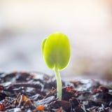 Jonge plant die groeien stock fotografie