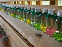 Jonge plant in een fles op de plank Stock Fotografie