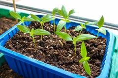 Jonge plant in een pot royalty-vrije stock afbeelding