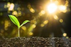 Jonge plant in het ochtendlicht royalty-vrije stock afbeeldingen