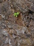 Jonge plant op steen Stock Afbeelding