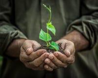 Jonge plant in oude handen tegen groene achtergrond Royalty-vrije Stock Foto's
