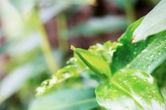 Jonge plant van nat bij zonsopgang royalty-vrije stock fotografie