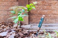 Jonge plantbakstenen muur stock fotografie