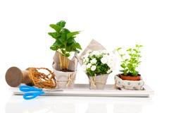 Jonge planten in het pakket voor verkoop wordt aangeboden die Royalty-vrije Stock Foto