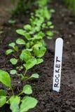 Jonge raketten in de tuin met etiket Royalty-vrije Stock Afbeeldingen
