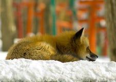 Jonge rode vos in de winter Royalty-vrije Stock Afbeeldingen