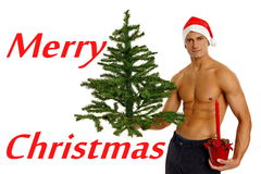 Jonge Santa Claus met boom Royalty-vrije Stock Afbeelding