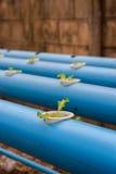 Jonge sla in hydrocultuurlandbouwbedrijf in Thailand Royalty-vrije Stock Afbeeldingen