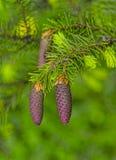 Jonge sparappel in de lente op een groene achtergrond royalty-vrije stock afbeelding
