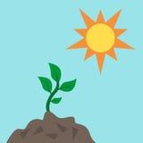 Jonge spruit en zon Stock Illustratie